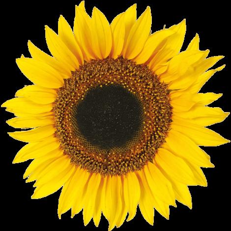 sunflower-home